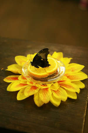 subsist: Black butterfly on the orange slice with flower