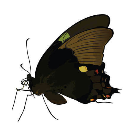subsist: Black butterfly with colored spots isolated. Vector illustration. Eps 8.