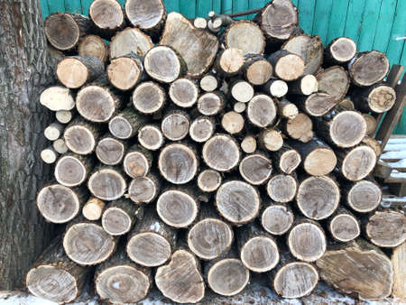 The background consists of saws of thick logs stacked on top of each other in the form of a woodpile. Annual rings are visible on the cross-section of the trunks.