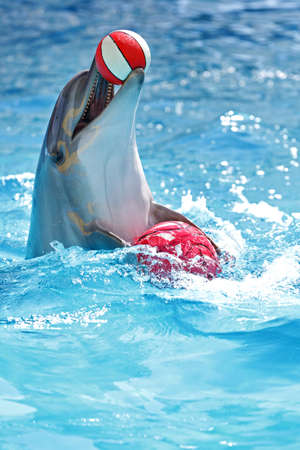 dolphin playing with a ball in the pool Stock Photo