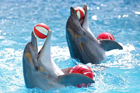 dolphins playing with balls in the pool