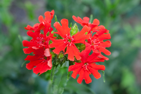 showy: A showy red flower  Stock Photo