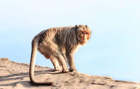 Monkeys four-legged mammals