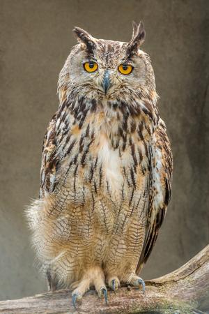 are fed: Owl; night-bird; Predator: mice fed