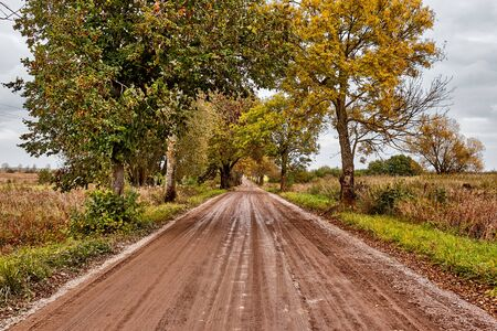 Road in the autumn forest. Dramatic sky and orange field. Landscape.