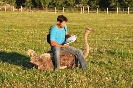 enthusiasm: Man with enthusiasm reads the book sitting on the African ostrich