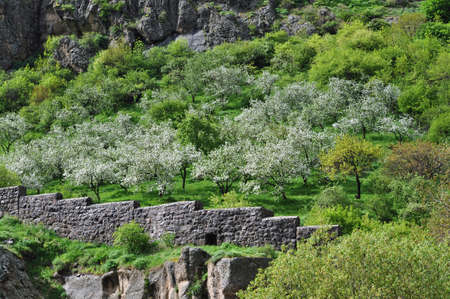 geghard: Mountain slope with fruit trees. Spring day near the monastery Geghard.