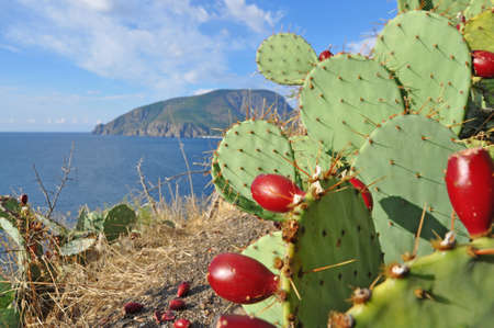 Ayu-Dag mountain or Medved-gora. View from the east on Partenit bay. Prickly pear cactus with ripe fruit in the foreground Stock Photo