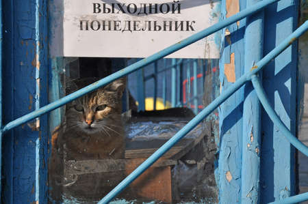 mondays: a cat and signboard that says in russian Mondays off-day