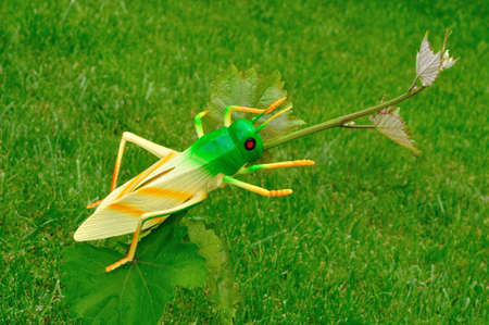 vegetation: Plastic grasshoppers on green vegetation