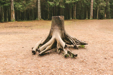 The root system of the tree is visually nature education wild