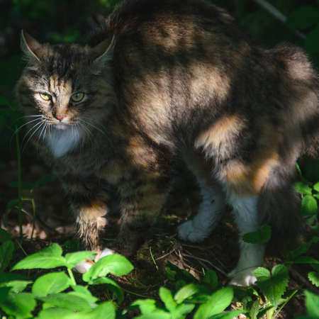 the frightened cat in the shade of trees photo