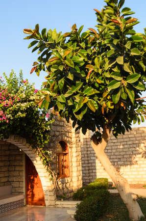 beautiful yard with ficus photo