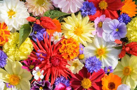 bright colors photo