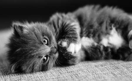 tenderness kitten photo
