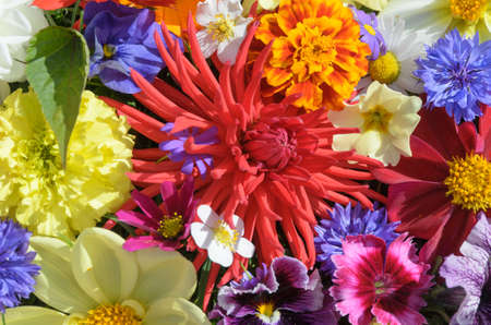 background with multicolored flowers photo