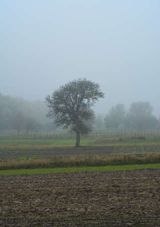Tree silhouette in fog early morning in autumn