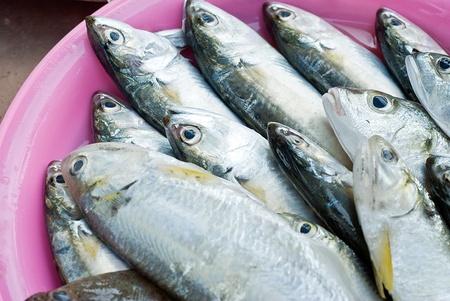 fishy: heap of fresh fish in tray prepaing for sale in market