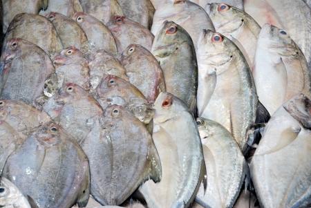 fresh fish heap on ice in maket photo
