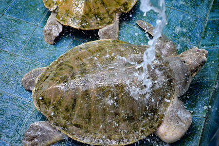 endanger: Injured Turtles were treated at aquarium