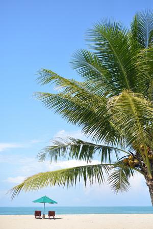 arbre de noix de coco sucré sur le ciel bleu avec chaise de plage et parasol sur fond