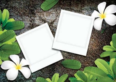 Frangipani-Bl�ten und Foto auf Felsen