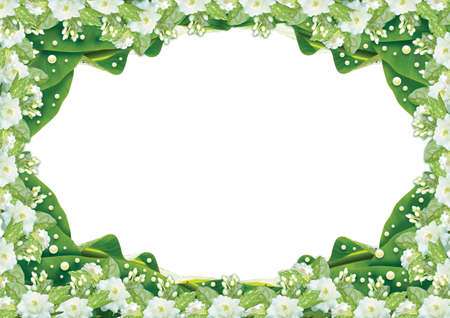 Jasmine  border on White background Stock Photo