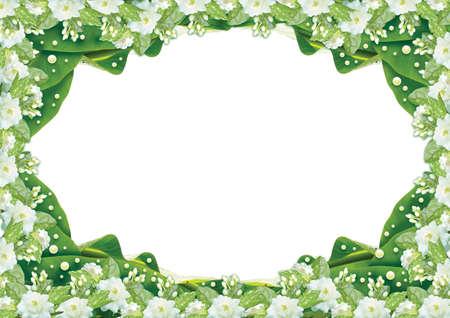 Jasmine  border on White background Stock Photo
