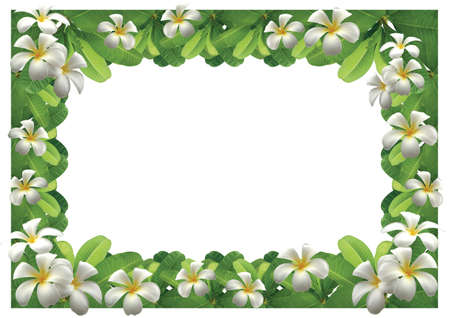 Frangipani flowers - border White background Stock Photo
