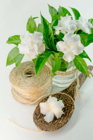 White flowers of jasmine Stock Photo