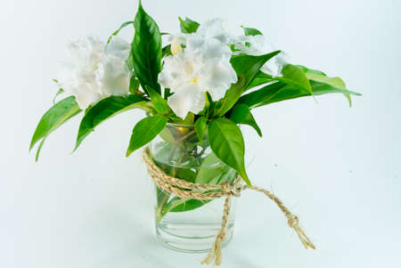 White flowers of jasmine photo