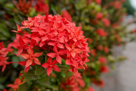 Rote Blume Lizenzfreie Bilder
