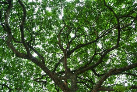 Wald, B?ume, Natur gr?nen Wald Sonnenlicht Hintergrund Lizenzfreie Bilder