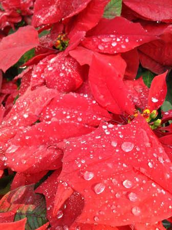 Christmas star close up