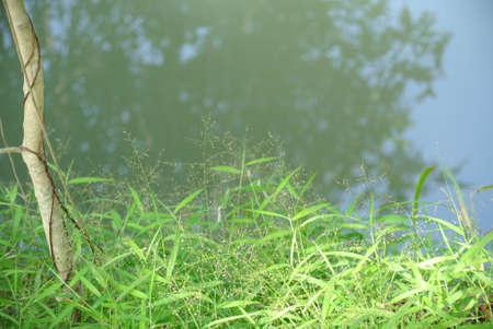 Reflexionen in Wasser Lizenzfreie Bilder