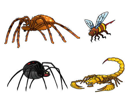 Collection of poisonous insects  Tarantula, black widow, scorpion, hornet  photo