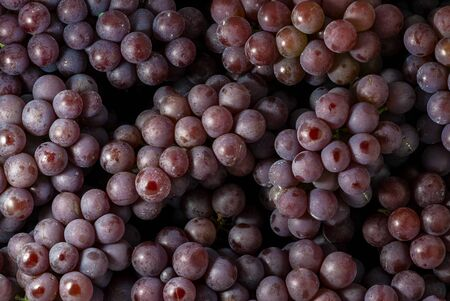 Close-Up of a Brunch of Red Wine Grapes Background 版權商用圖片