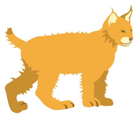 Orange cat Illustration