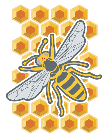 Honey Bee resting in honeycomb on white background, vector illustration. Ilustracja