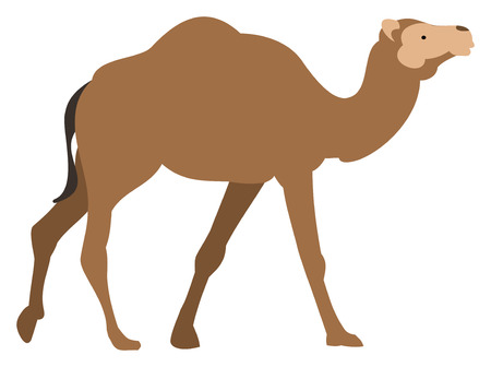 A camel on white background, vector illustration.