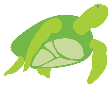 Green Sea Turtle Иллюстрация