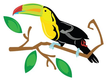 Toucan Bird Sitting on a Tree Branch