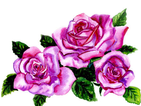 rosebuds: Watercolor three roses on a white background
