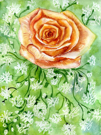 rose on green background