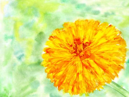 watercolor flower marigold photo