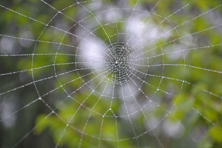 s trap: a spider web with some water droplets early in the morning  Stock Photo