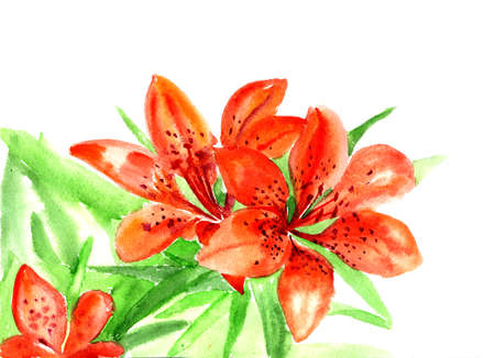 watercolors flowerses to lilies on white for text Stock Photo