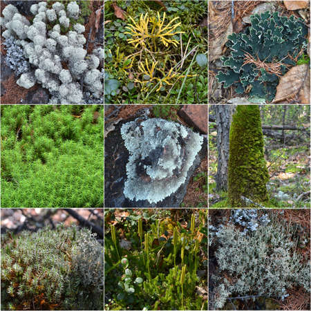 collage wood moss  photo