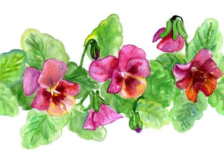 watercolors flowerses Viola  repetition