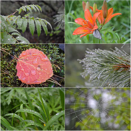 collage of a drop of water on a grass, a flower, a web, a leaf, a mountain ash, a pine